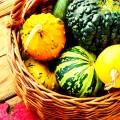 Pumpkins, Squash & Gourds