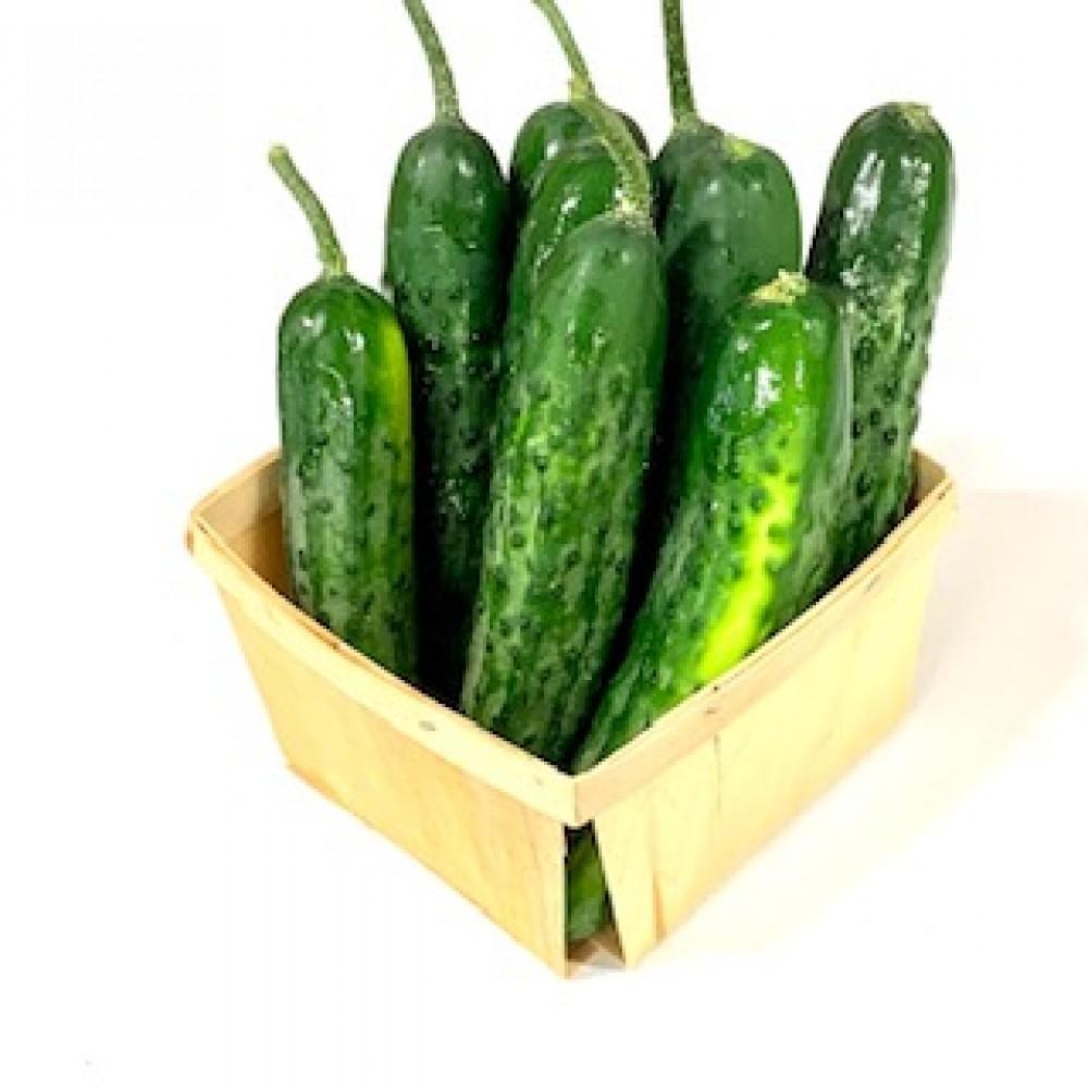 Mini Slicer Cucumbers (6-Day Size)