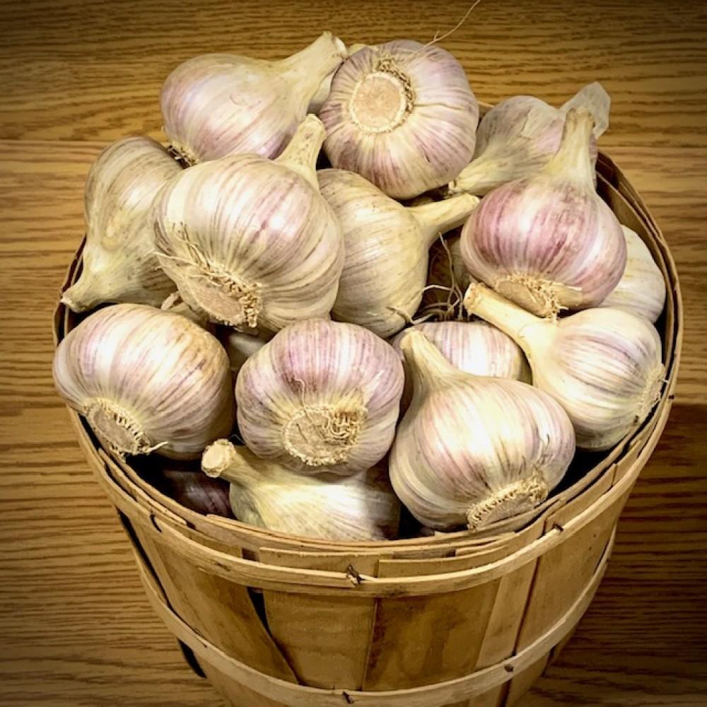 Ontario Garlic - Organic