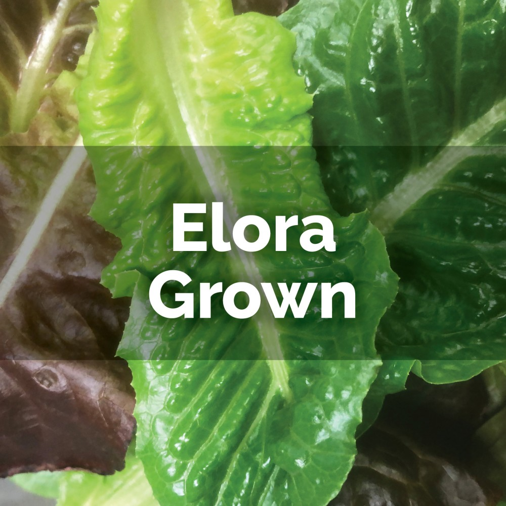 Baby Heritage Red Romaine Mix - loose leaves